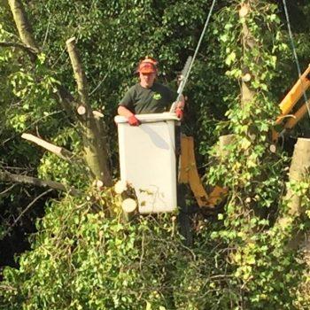 TJB Landscaping Tree Surgery